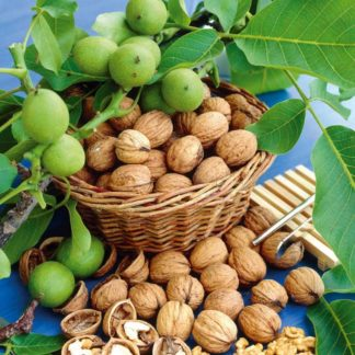 Грецкий орех Булганак