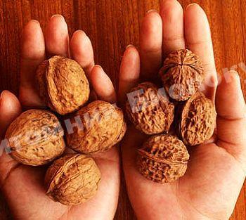 Грецкий орех Пятилетка