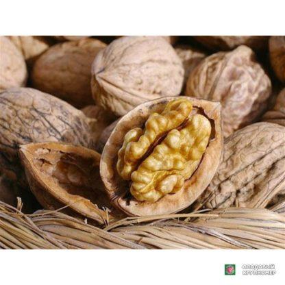 Грецкий орех Селекционер