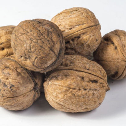 Грецкий орех Садко