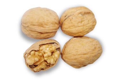 Грецкий орех Фернор (Fernor)