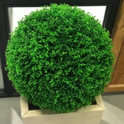 Самшит вечнозеленый ШАР