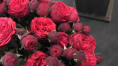 Роза Пиано Ред